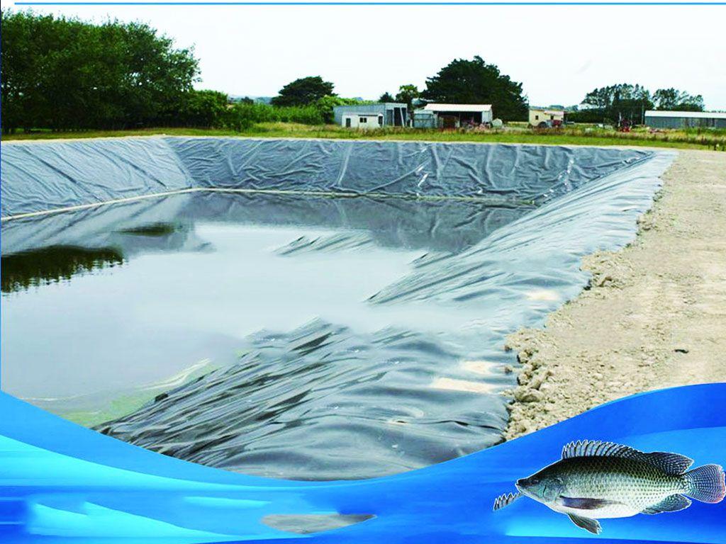 Địa Chỉ Bán Bạt HDPE Lót Ao Hồ Chứa Nước Nuôi Cá Tưới Cây Tại Bảo Lộc